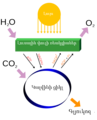 Simple photosynthesis overview-hy.png