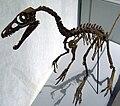 Sinosauropteryxskull.jpg