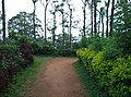 Sitargundu Estate, Kollengode South, Kerala 678508, India - panoramio (9).jpg