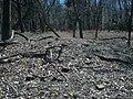 Site of...something, site of Lexington plantation.jpg