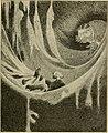 Skämtbilden och dess historia i konsten (1910) (14764985285).jpg