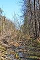 Skulyn Kovelskyi Volynska-Lisova khashcha nature monument-view near road-1.jpg