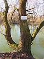 Slape Ljubljana Slovenia - tree.jpg