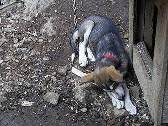 Sled Dog Discovery & Musher's Camp 42.jpg