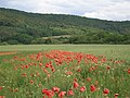 Slovakia Sariska highlands 21.jpg