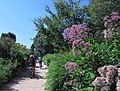 Smithsonian Gardens in July (20088141775).jpg