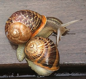 Description de l'image Snails2.jpg.