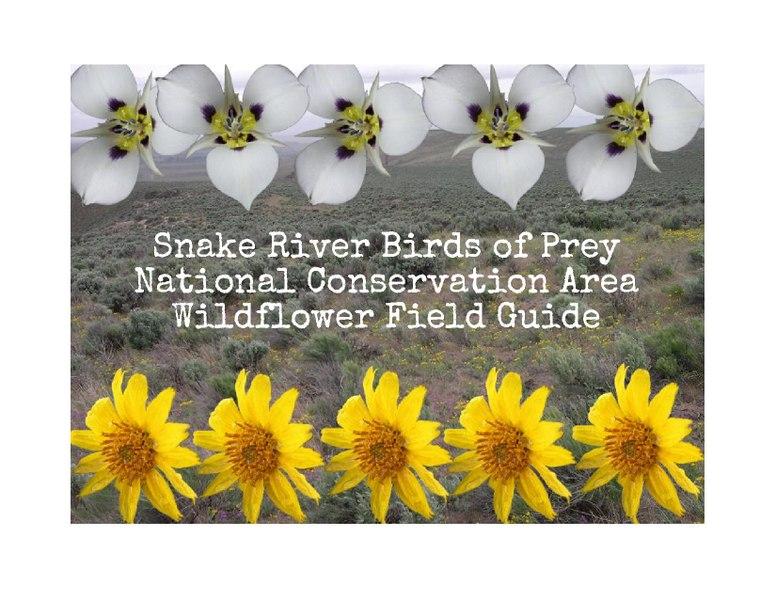 File:Snake River Birds of Prey NCA Wildflower Field Guide.pdf