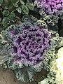 Snbdsjsjjd flower.jpg
