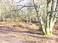 Somerset Hill, Holmbury - geograph.org.uk - 1093461.jpg