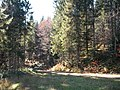 Sommerlicher Herbst Herrenstuhl - panoramio (27).jpg