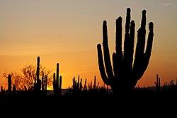 Palabras encadenadas - Página 38 250px-Sonoran_desert_sunset