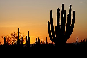 Sunset in the Sonoran Desert, Mexico. Atardece...