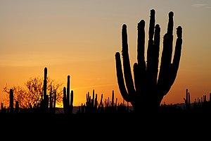 Sunset in the Sonoran Desert, Mexico. Atardece...