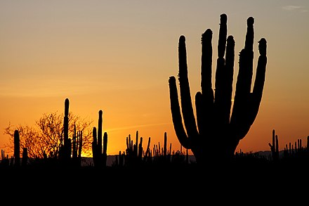 Sunset over the desert in Sonora Sonoran desert sunset.jpg