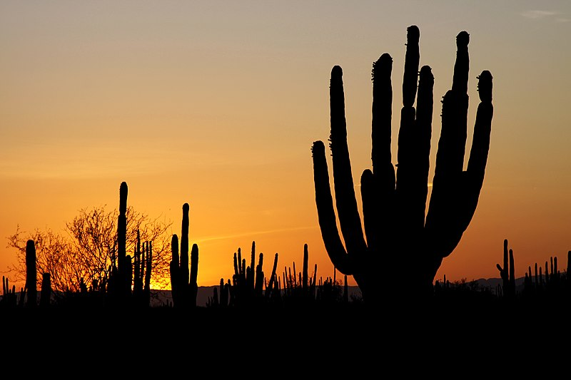 File:Sonoran desert sunset.jpg