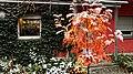Sorbus Herbstlaub 14.jpg