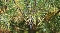 Southern Hawker dragonfly - carefully choosing a busy background! (9900270544).jpg