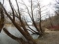 Sovetskiy rayon, Bryansk, Bryanskaya oblast', Russia - panoramio (443).jpg