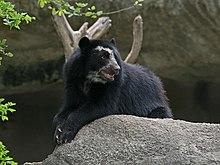 Pandas thumb blog