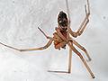 Spider in the corner (13763495994).jpg