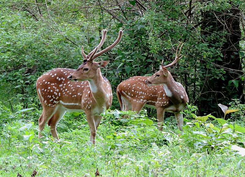 the tiger and deer by aurobindo ghosh Let me tell you something first before i say about the interesting places in chennai intially, i'm not properly from chennai and now i'm in.