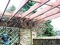 Springbank Park Rose Garden London011.jpg