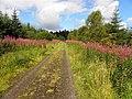 Springwell Forest - geograph.org.uk - 2022108.jpg