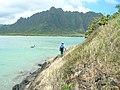 Starr-050419-0407-Terminalia catappa-habit with Kim-Mokolii-Oahu (24119204613).jpg