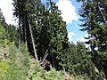 Steilhang - Gerlitzen-Alp - panoramio.jpg