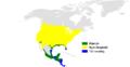 Stelgidopteryx serripennis distribution map.png
