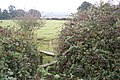 Stile near blackberry bushes - geograph.org.uk - 1499354.jpg
