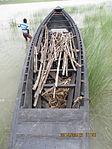 Still boat in Chars of Jamuna river at Bogra 12.jpg