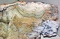 Stromatolite (Strelley Pool Formation, Paleoarchean, 3.35-3.46 Ga; East Strelley Greenstone Belt, Pilbara Craton, Western Australia) 3 (16750046154).jpg