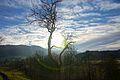 Sunshine through a tree.JPG