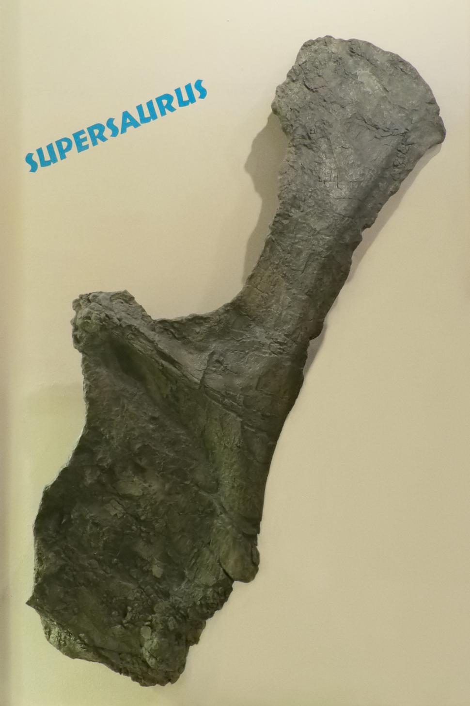 Supersaurus-Holotype-BYU9025-PerspectiveWarp