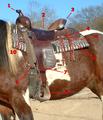 Sv western saddle parts.png