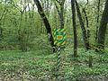 Svydivok Oak Trees-1.jpg