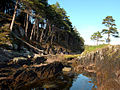 Tahilla - Rock Pools and Coast Pines - panoramio.jpg
