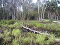 Taylor lake, largo, florida 017.jpg