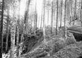 Teil des fertigen Schützengrabens - CH-BAR - 3240428.tif