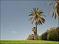 Tel Aviv By Dainis Matisons (3307928325).jpg