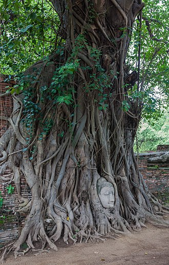 Ayutthaya Historical Park - The head of Buddha, Wat Mahathat