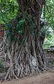Templo Mahathat, Ayutthaya, Tailandia, 2013-08-23, DD 21.jpg