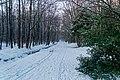 Texel - Kwekerijweg - View NW in Winter I.jpg
