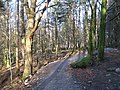 The Braan walk - geograph.org.uk - 711022.jpg