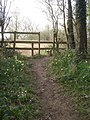 The Daffodil Way exits Allum's Grove - geograph.org.uk - 769251.jpg