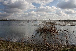 Washland - The Ouse Washes between the Old and New Bedford River