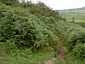 The bridleway from Bradwell Edge - geograph.org.uk - 1448078.jpg
