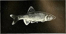 The complete aquarium book; the care and breeding of goldfish and tropical fishes (1936) (20050664283).jpg